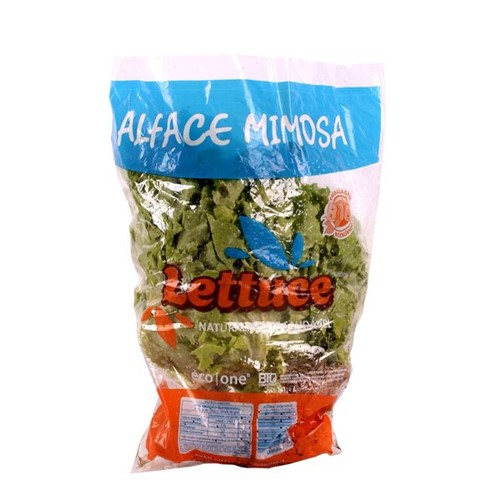 Alface Mimosa Lettuce Maco
